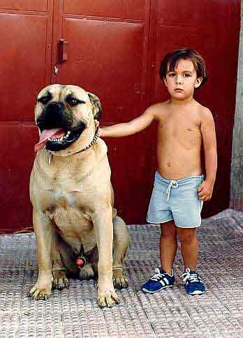 Entre perros